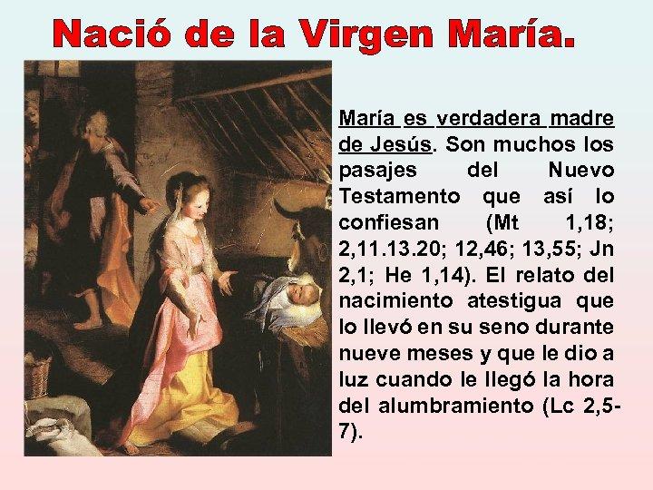 María es verdadera madre de Jesús. Son muchos los pasajes del Nuevo Testamento que