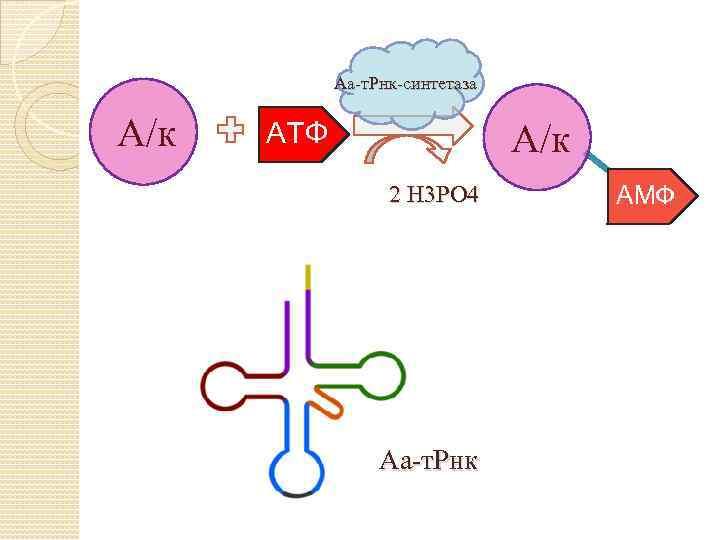 Аа-т. Рнк-синтетаза А/к АТФ А/к 2 Н 3 РО 4 Аа-т. Рнк АМФ