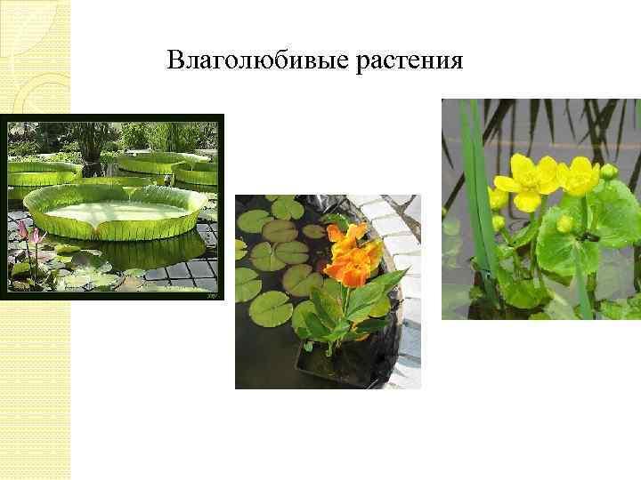 Влаголюбивые растения картинки и названия