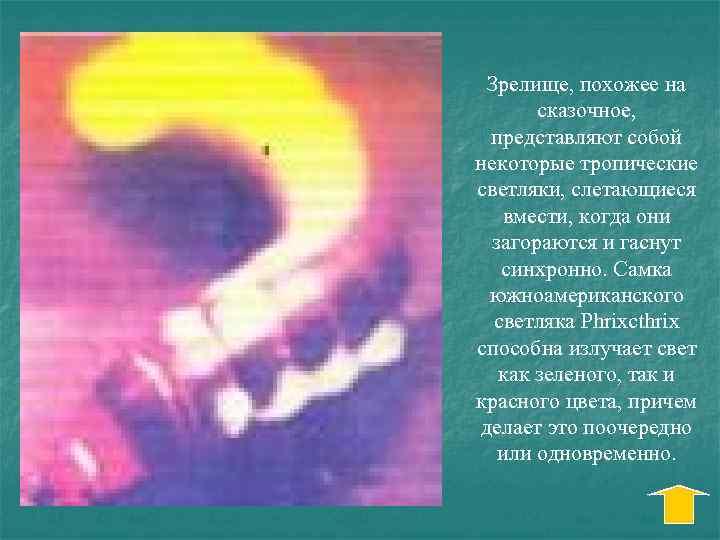 Зрелище, похожее на сказочное, представляют собой некоторые тропические светляки, слетающиеся вмести, когда они загораются