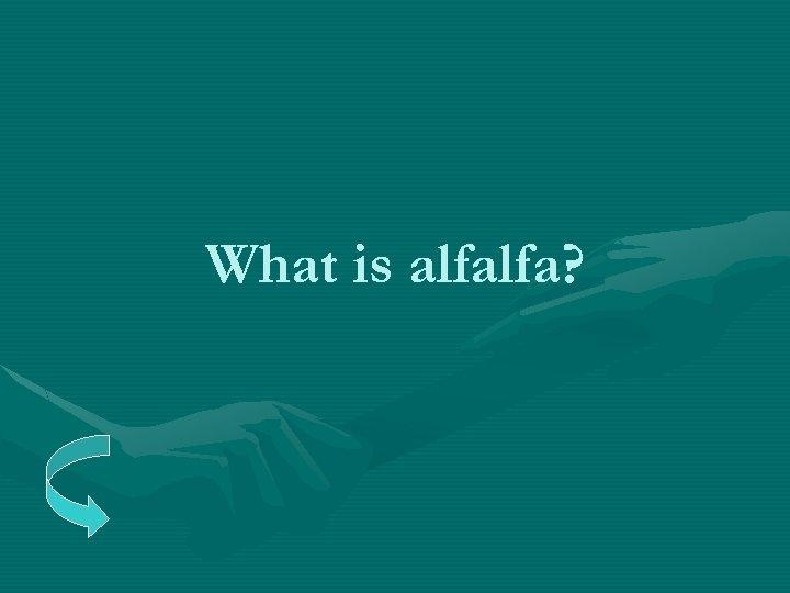 What is alfalfa?