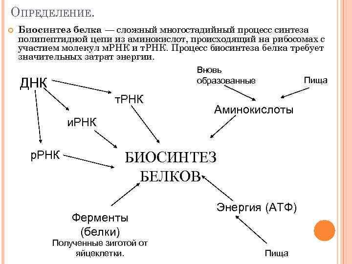 ОПРЕДЕЛЕНИЕ. Биосинтез белка — сложный многостадийный процесс синтеза полипептидной цепи из аминокислот, происходящий на