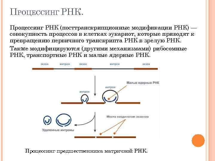 ПРОЦЕССИНГ РНК. Процессинг РНК (посттранскрипционные модификации РНК) — совокупность процессов в клетках эукариот, которые