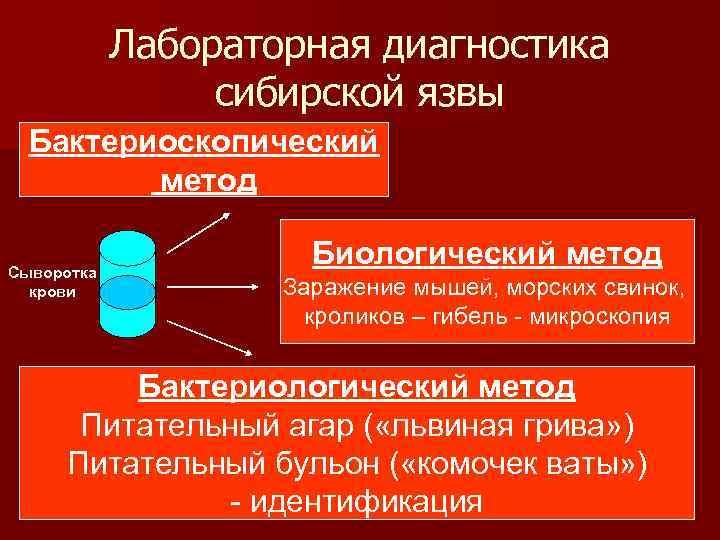 Лабораторная диагностика сибирской язвы Бактериоскопический метод Сыворотка крови Биологический метод Заражение мышей, морских свинок,