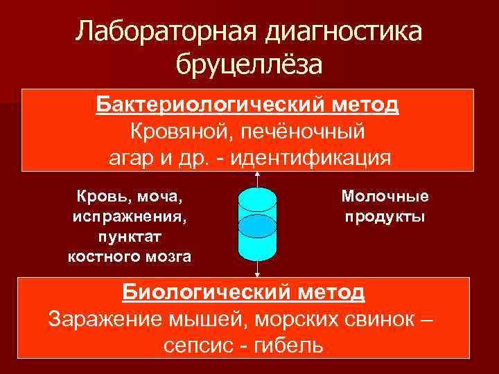 Лабораторная диагностика бруцеллёза Бактериологический метод Кровяной, печёночный агар и др. - идентификация Кровь, моча,
