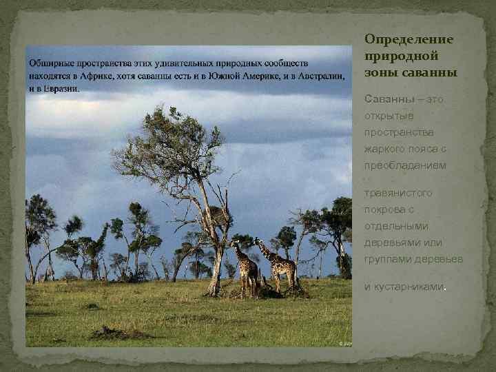 Определение природной зоны cаванны Саванны – это открытые пространства жаркого пояса с преобладанием травянистого