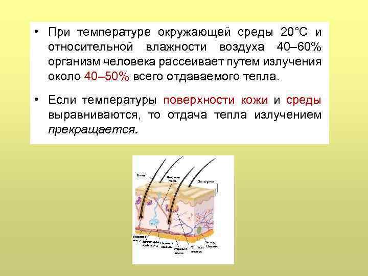 • При температуре окружающей среды 20°С и относительной влажности воздуха 40– 60% организм