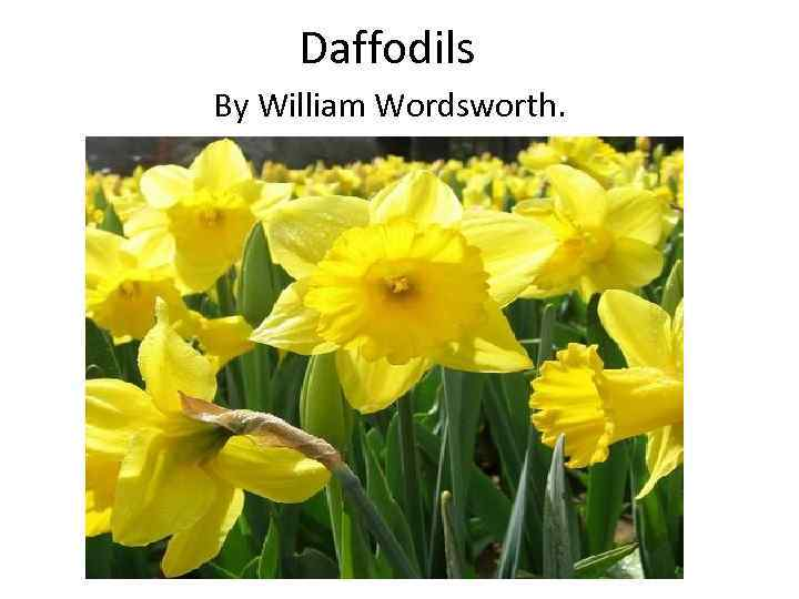william wordsworths the daffodils compared to miracle - william wordsworth's the daffodils compared to gillian clarke's miracle on st david's day in this essay i will attempt to compare two very contrasting poems, william wordsworth's `the daffodils' which was written in pre 1900s and gillian clarke's 'miracle on st david's day', written in the 20th century.