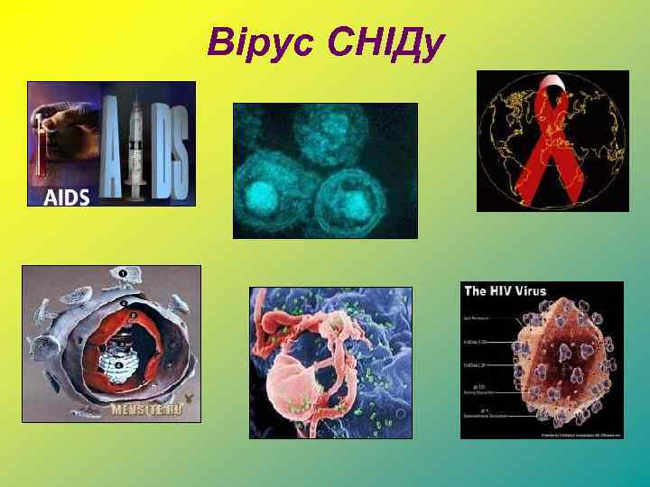 Вірус СНІДу