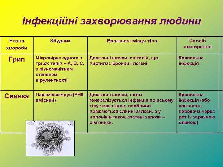 Інфекційні захворювання людини Назва хвороби Збудник Грип Мікровірус одного з трьох типів – A,