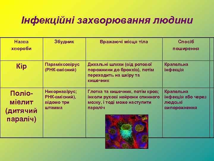 Інфекційні захворювання людини Назва хвороби Збудник Вражаючі місця тіла Спосіб поширення Кір Параміксовірус (РНК-вмісний)