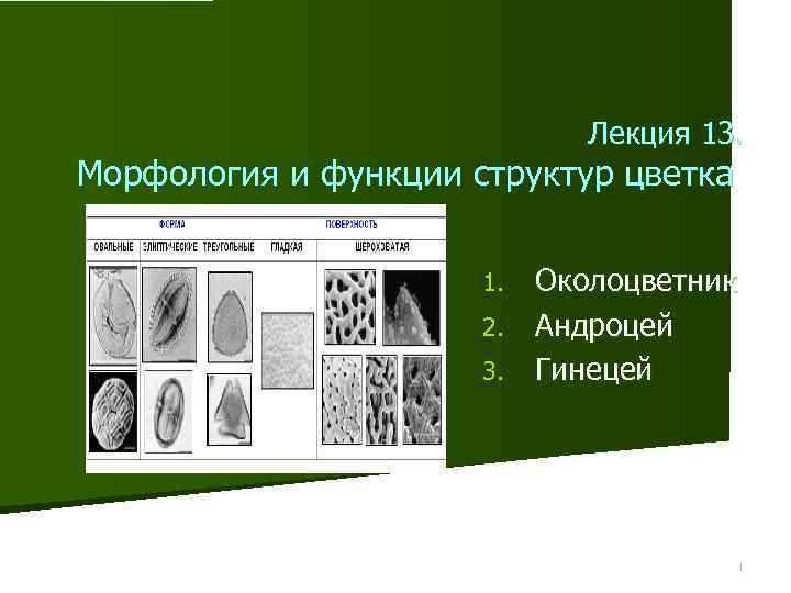 Лекция 13. Морфология и функции структур цветка Околоцветник 2. Андроцей 3. Гинецей 1. 1