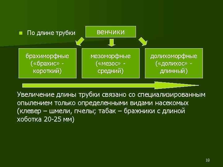 n По длине трубки брахиморфные ( «брахис» короткий) венчики мезоморфные ( «мезос» средний) долихоморфные