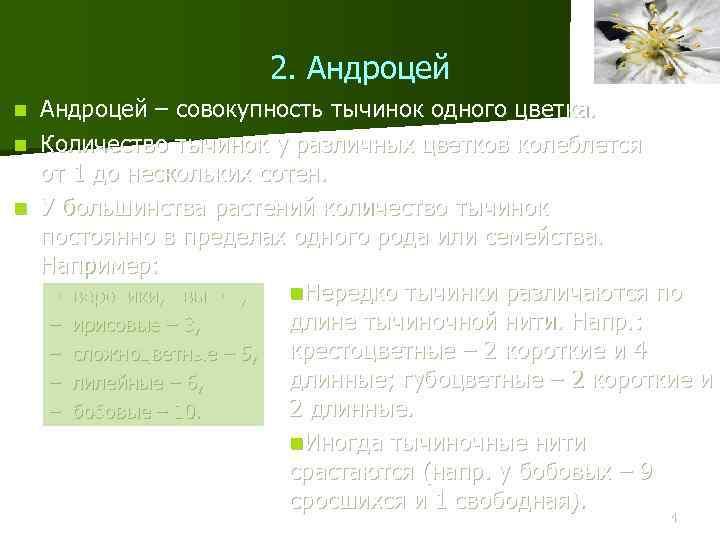 2. Андроцей – совокупность тычинок одного цветка. n Количество тычинок у различных цветков колеблется
