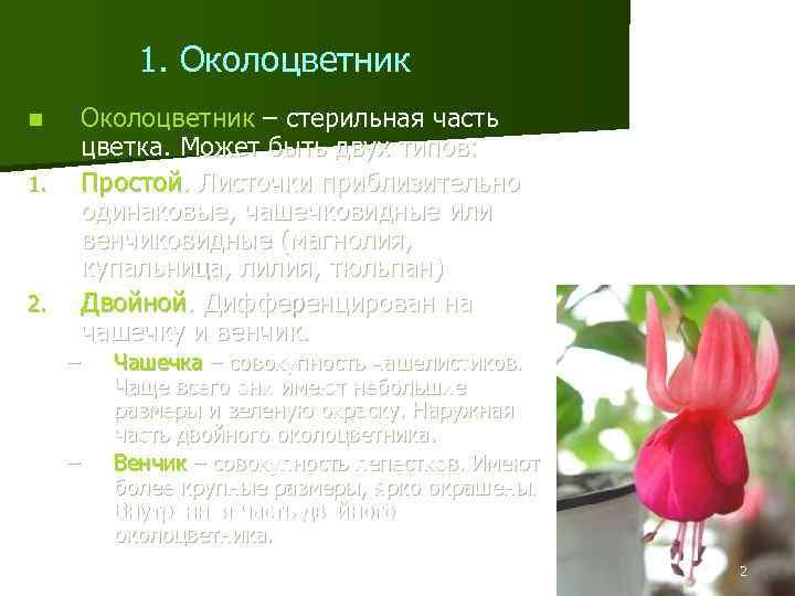 1. Околоцветник n 1. 2. Околоцветник – стерильная часть цветка. Может быть двух типов: