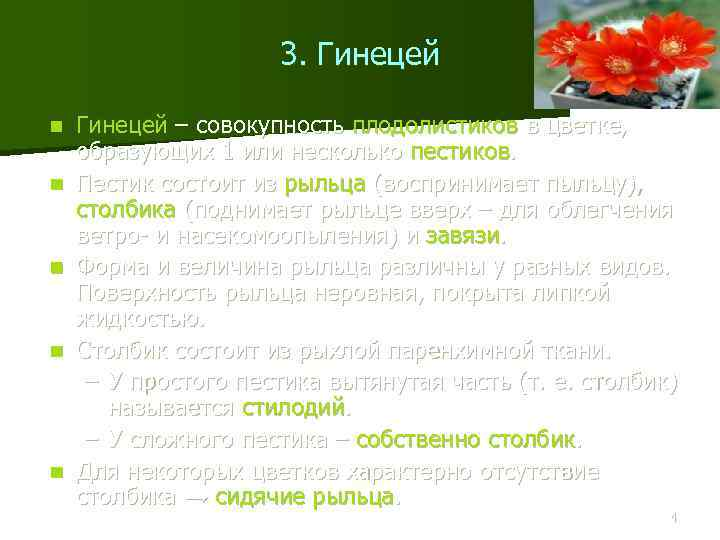 3. Гинецей n n n Гинецей – совокупность плодолистиков в цветке, образующих 1 или