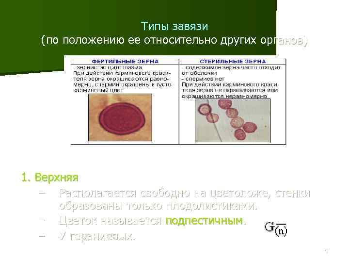 Типы завязи (по положению ее относительно других органов) 1. Верхняя – Располагается свободно на