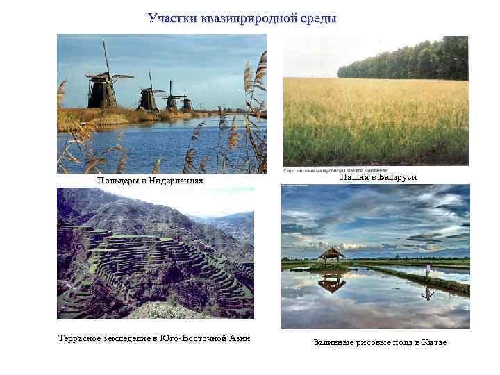 Участки квазиприродной среды Польдеры в Нидерландах Террасное земледелие в Юго-Восточной Азии Пашня в Беларуси