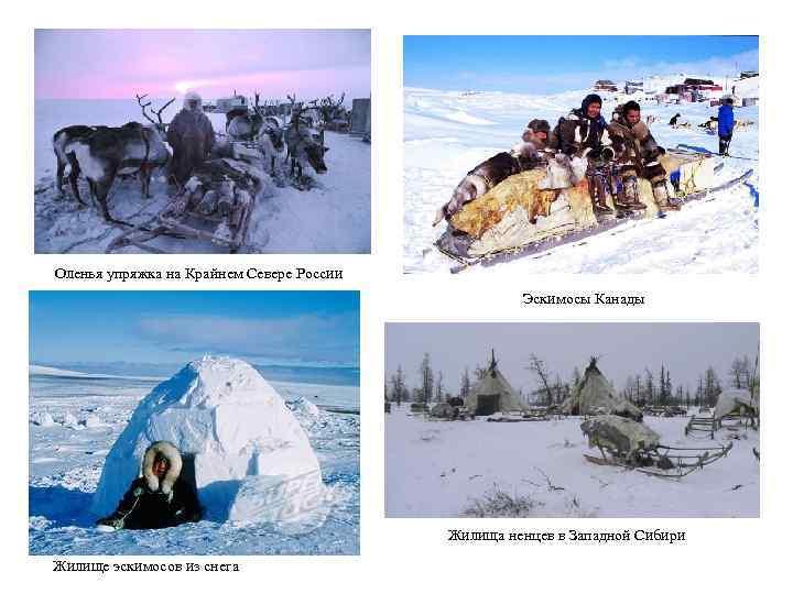 Оленья упряжка на Крайнем Севере России Эскимосы Канады Жилища ненцев в Западной Сибири Жилище