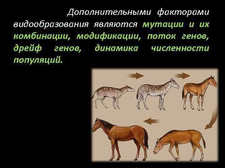 Дополнительными факторами видообразования являются мутации и их комбинации, модификации, поток генов, дрейф генов, динамика