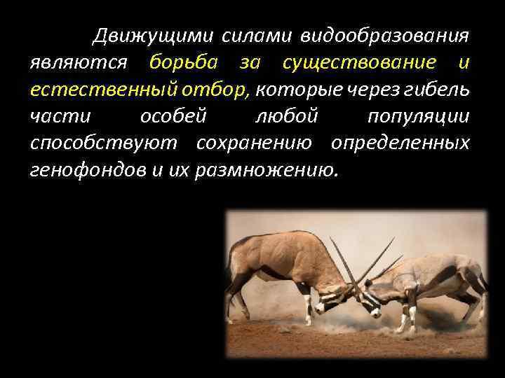 Движущими силами видообразования являются борьба за существование и естественный отбор, которые через гибель части