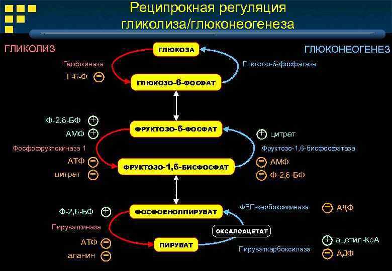 Реципрокная регуляция гликолиза/глюконеогенеза ГЛИКОЛИЗ ГЛЮКОНЕОГЕНЕЗ ГЛЮКОЗА Гексокиназа - Г-6 -Ф Ф-2, 6 -БФ АМФ