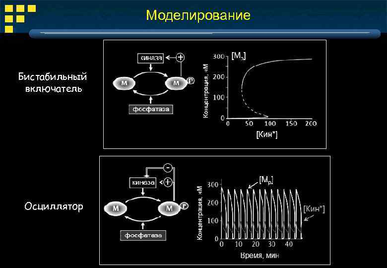 Моделирование Бистабильный включатель Осциллятор