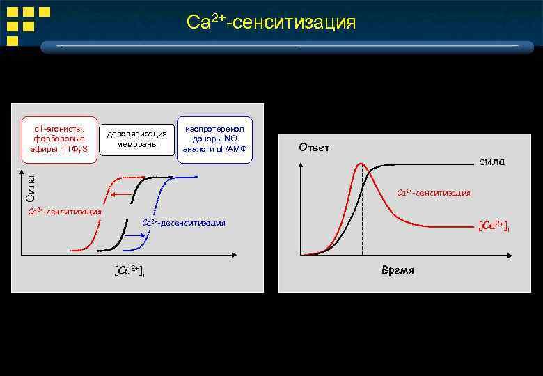 Ca 2+-сенситизация деполяризация мембраны изопротеренол доноры ΝΟ аналоги ц. Г/АМФ Сила α 1 -агонисты,