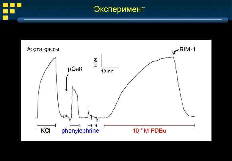 Эксперимент BIM-1 p. Ca 8 KCl 1 m. N Аорта крысы phenylephrine 10 min
