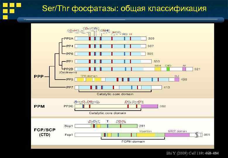Ser/Thr фосфатазы: общая классификация (CTD) Shi Y (2009) Cell 139: 468 -484