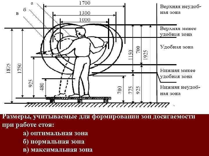 Размеры, учитываемые для формировании зон досягаемости при работе стоя: а) оптимальная зона б) нормальная