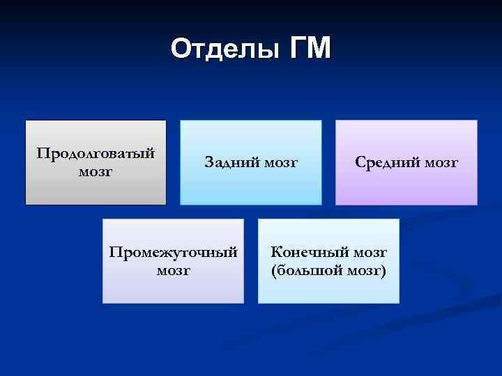 Отделы ГМ Продолговатый мозг Задний мозг Промежуточный мозг Средний мозг Конечный мозг (большой мозг)