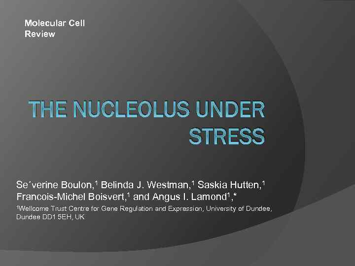 Molecular Cell Review THE NUCLEOLUS UNDER STRESS Se´verine Boulon, 1 Belinda J. Westman, 1