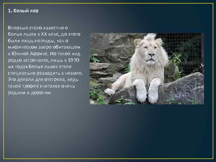 львы фото и описание надежность