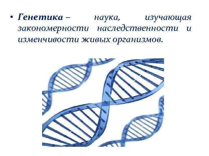 • Генетика – наука, изучающая закономерности наследственности и изменчивости живых организмов.