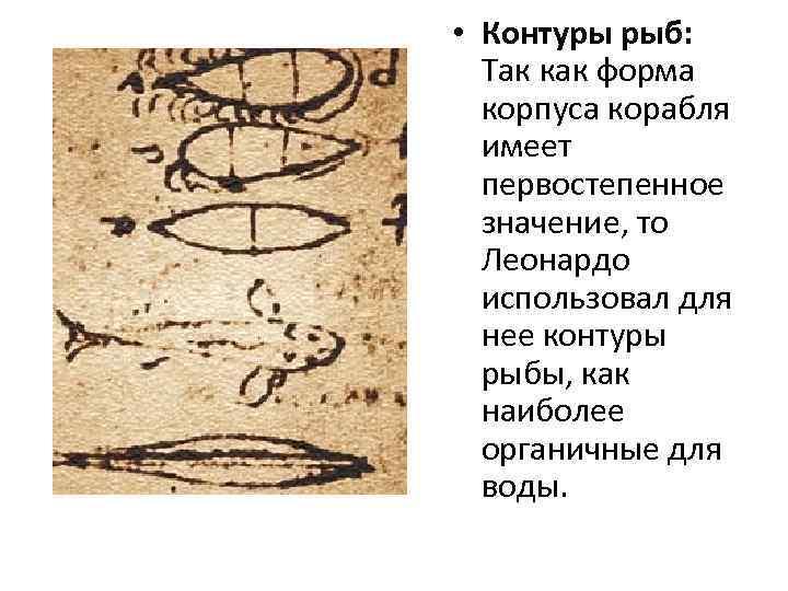 • Контуры рыб: Так как форма корпуса корабля имеет первостепенное значение, то Леонардо
