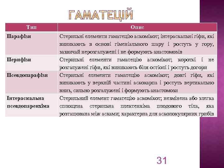 Тип Парафізи Перифізи Псевдопарафізи Інтераскальна псевдопаренхіма Опис Стерильні елементи гаматецію аскомікот; інтераскальні гіфи, які