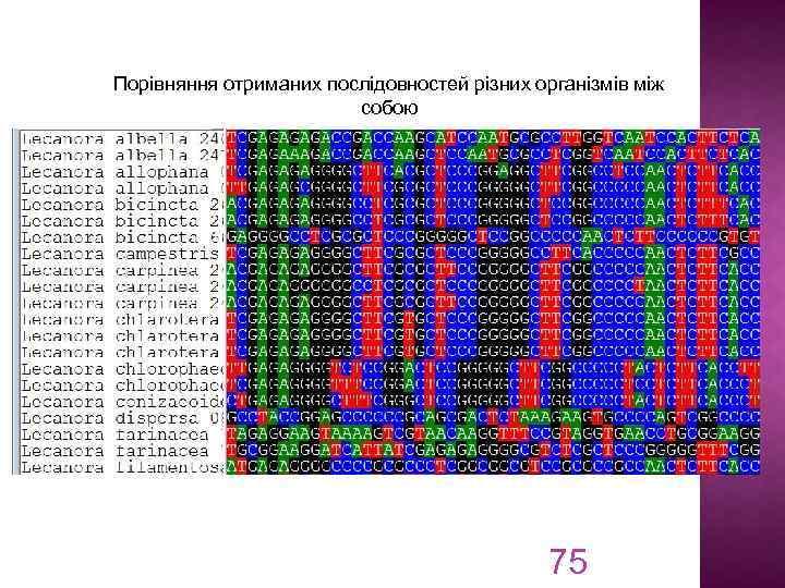 Порівняння отриманих послідовностей різних організмів між собою 75