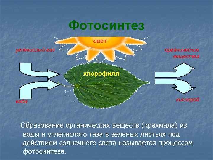 какова роль воды в процессе фотосинтеза губы должны