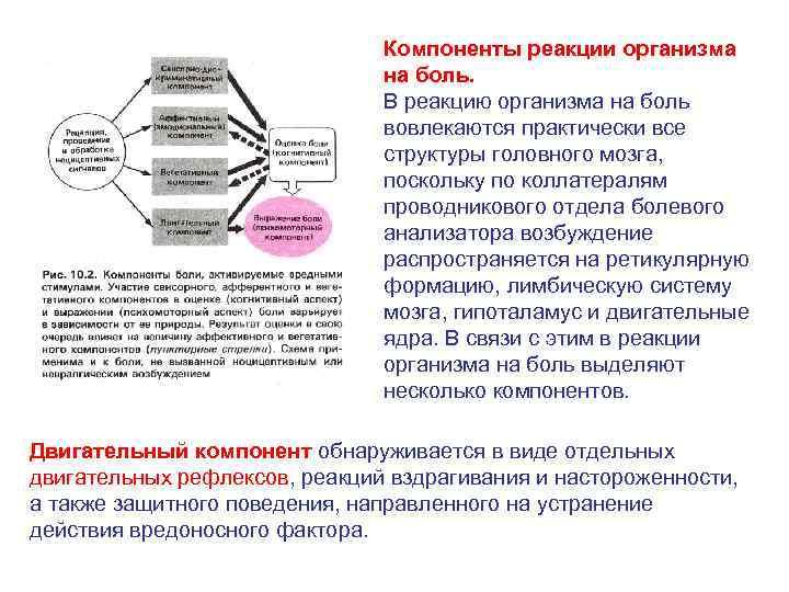 Компоненты реакции организма на боль. В реакцию организма на боль вовлекаются практически все структуры