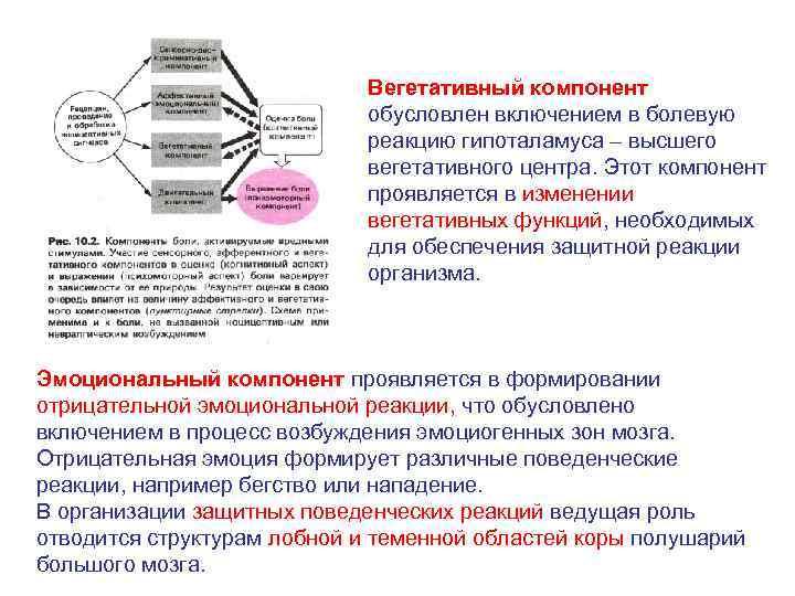 Вегетативный компонент обусловлен включением в болевую реакцию гипоталамуса – высшего вегетативного центра. Этот компонент