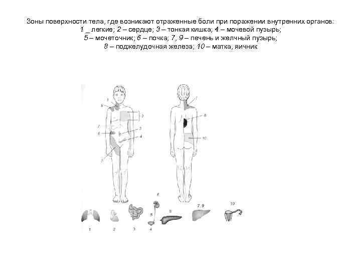 Зоны поверхности тела, где возникают отраженные боли при поражении внутренних органов: 1 _ легкие;