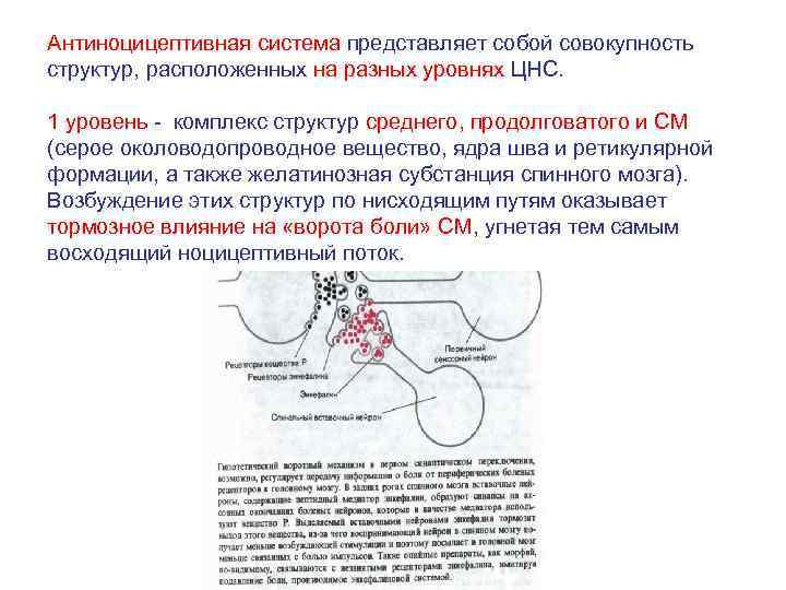 Антиноцицептивная система представляет собой совокупность структур, расположенных на разных уровнях ЦНС. 1 уровень -