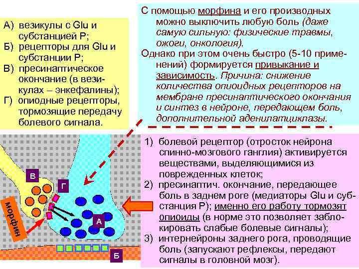 А) везикулы с Glu и субстанцией Р; Б) рецепторы для Glu и субстанции Р;
