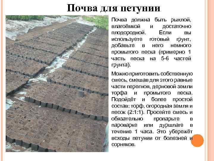 Почва для петунии Почва должна быть рыхлой, влагоёмкой и достаточно плодородной. Если вы используете
