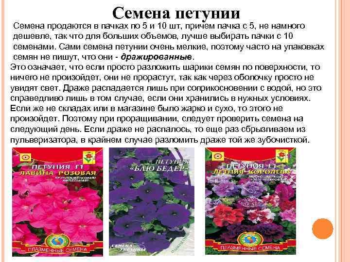 Семена петунии Семена продаются в пачках по 5 и 10 шт, причем пачка с