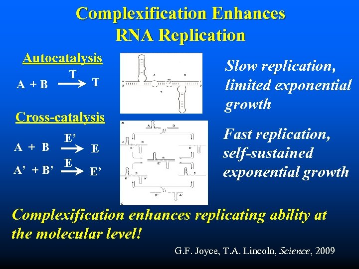 Complexification Enhances RNA Replication Autocatalysis A +B T T Cross-catalysis A + B A'