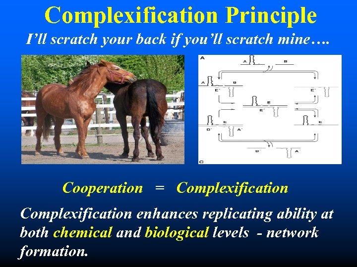 Complexification Principle I'll scratch your back if you'll scratch mine…. Cooperation = Complexification enhances