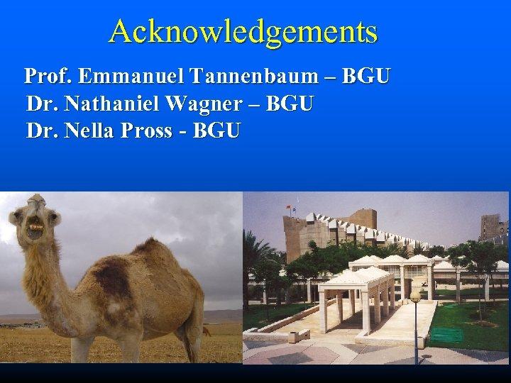 Acknowledgements Prof. Emmanuel Tannenbaum – BGU Dr. Nathaniel Wagner – BGU Dr. Nella Pross