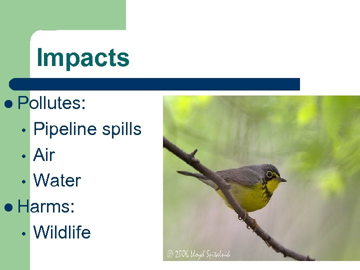 Impacts l Pollutes: Pipeline spills • Air • Water l Harms: • Wildlife •